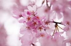 春のコーディネート