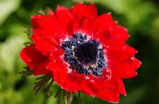 自然界で見られる 赤のイメージ
