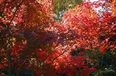 秋のコーディネート