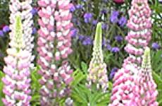 自然界で見られる ピンクのイメージ