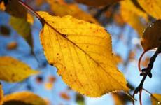 秋のよく晴れた日