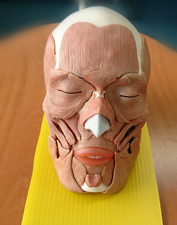 表情筋メンタルトレーニング!(顔筋トレーニング)オンラインレッスンは4月25日(土)までのお申し込みがお得!